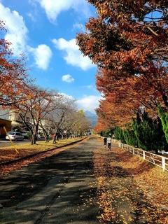 大羽根運動公園2.jpg