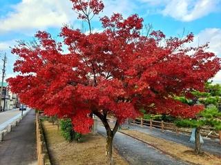 東海道紅葉.jpg