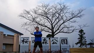桜の森.JPG